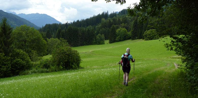het is een lichte wandeling dwars door de groene Alpenweiden