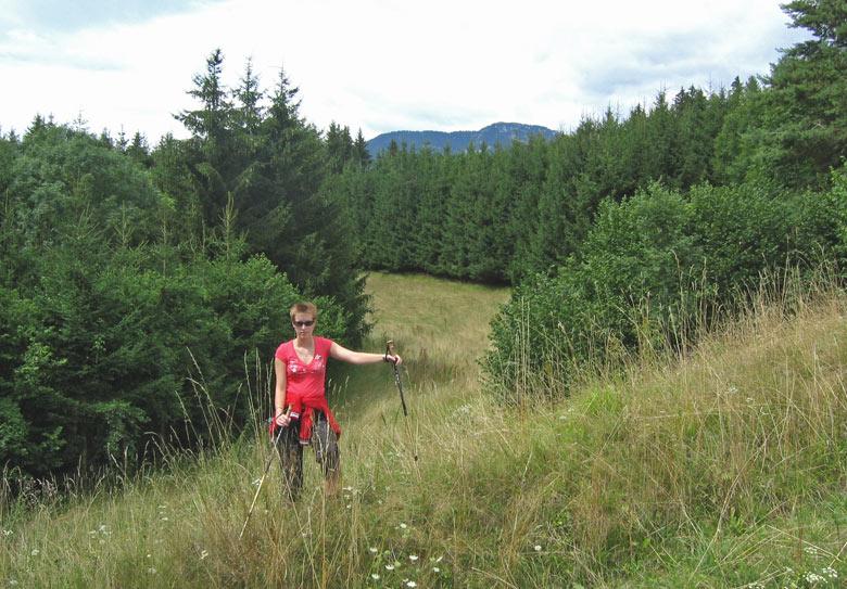 het karrenspoor is nauwlijks zichtbaar door het hoge gras op de alpenweide