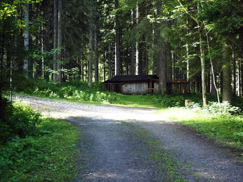 een driesprong in het bos