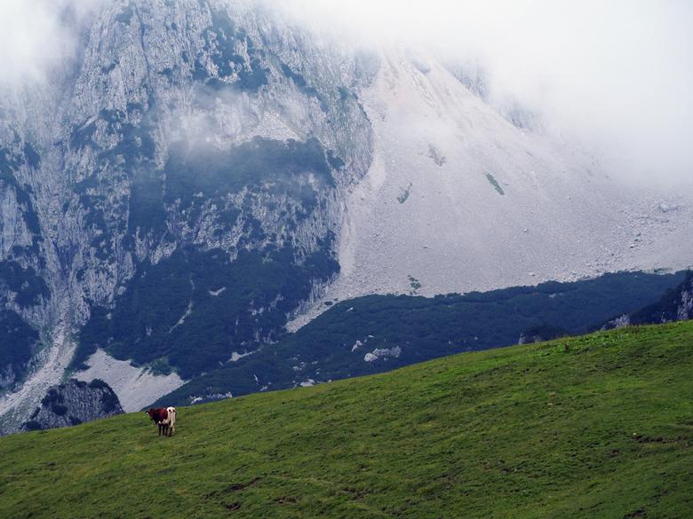 imposante bergwereld van de Gosaukamm