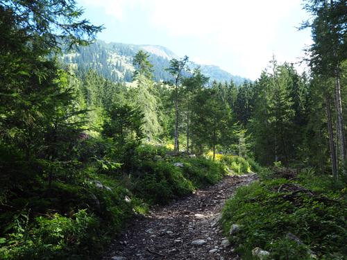 slecht onderhouden paden in het bos