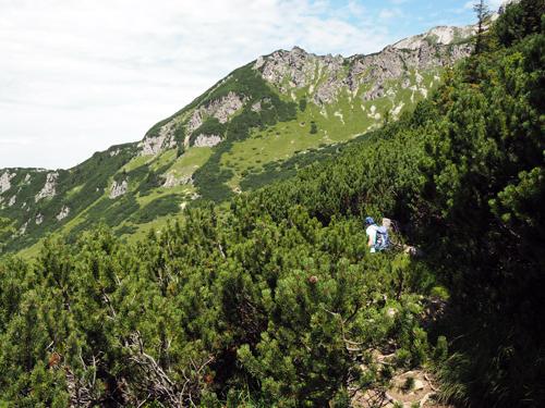 steeds weer door bosjes Alpenden
