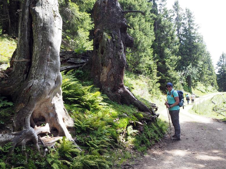 over een brede weg door het bos terug