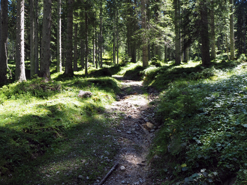 een stenig pad omhoog het bos in