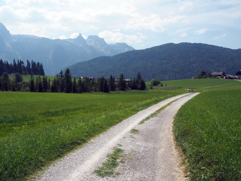 een brede weg richting het bos