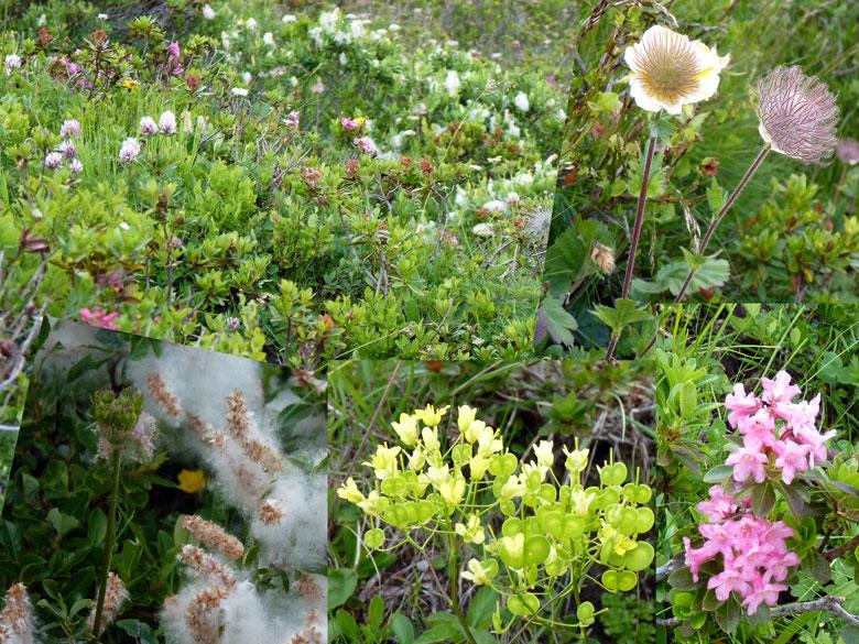afwisselende begroeiing met bloeiende struiken en Alpenbloemen