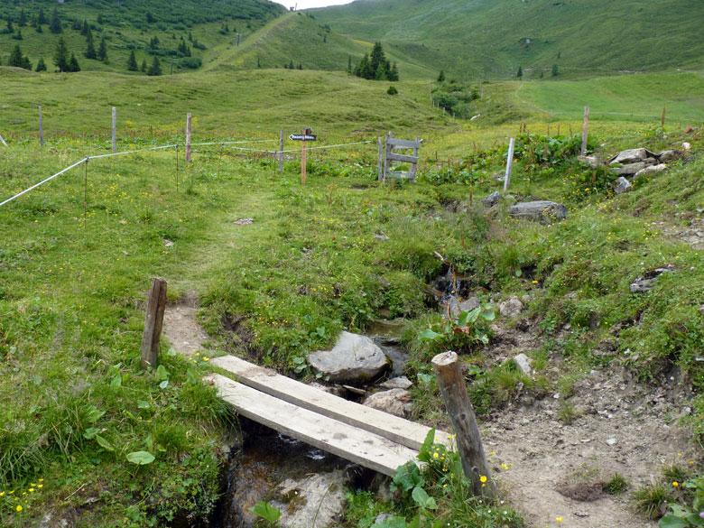 nog even over een Alpenwei, daarna het bos in