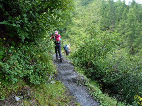 een prachtig wandelpad over rotsen en boomwortels