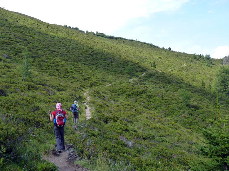 paadje over de berghelling bezaait met Alpenrosen