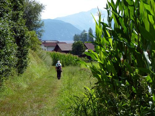 graslaan achter het dorpje Wald