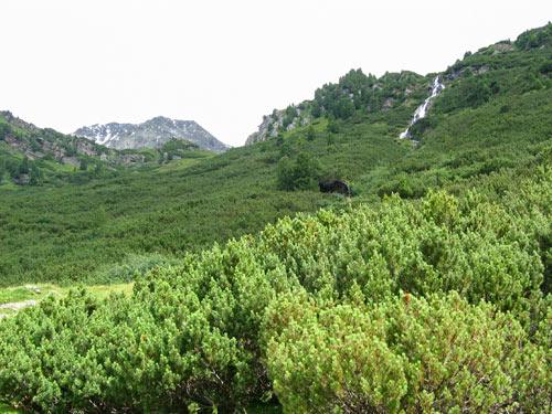 een uitgestrekt gebied begroeit met de Alpenden