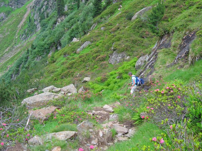 een prachtige bergwand vol Alpenrosen