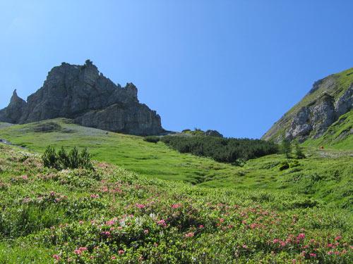uitgestrekte velden van Alpenrozen en fraaie rotsformaties rondom