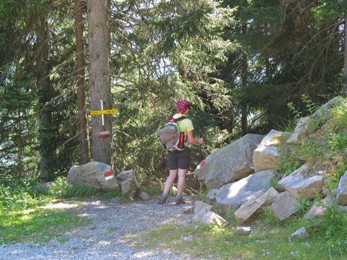 opnieuw de Forstweg oversteken en de Steig vervolgen