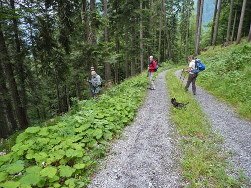 steeds weer verlaten we de Forstweg voor een afkorting over een bospad
