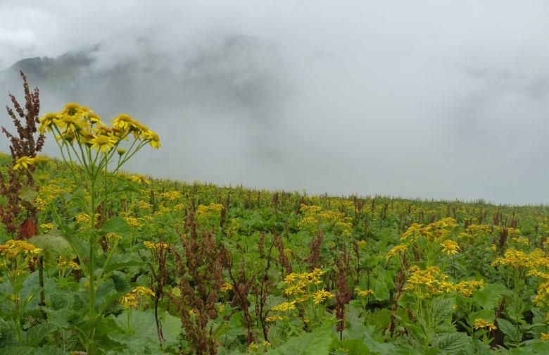 een wolk als achtergrond bij een Alpenbloemen foto