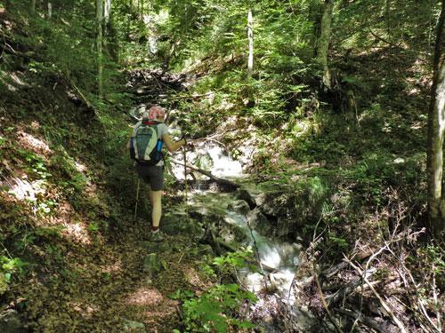 in het dichte bos passeren we veel bergbeekjes