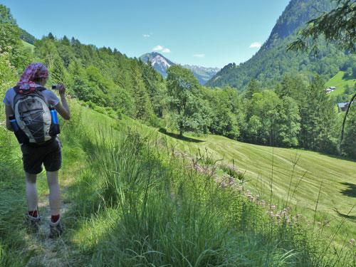 bos en Alpenweiden wisselen elkaar af