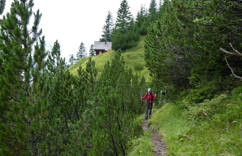 na de Hütte duiken we een stuk met lage Alpendennen in