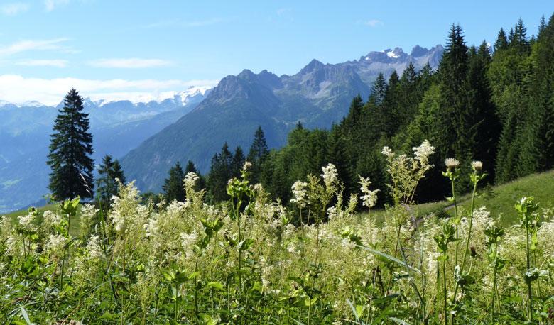 op de Sattel tussen de twee bergen even een mooi uitzicht voor we het bos in gaan