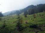 een schitterende Alm onderweg naar de Mondspitze