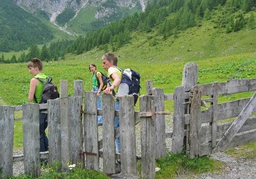 De alm op richting de HochweissSteinhütte