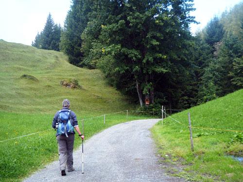 een onverharde weg naar het bos