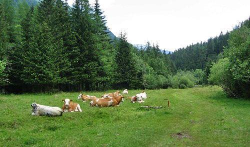 Koeien, paarden en kuddes geiten lopen er rond.