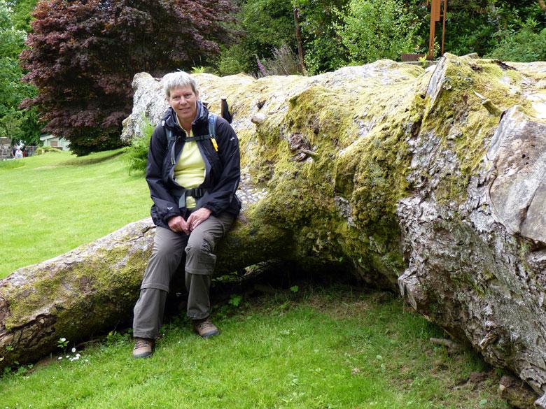 deze boom is opvallend genoeg door zijn grootte om hem te laten liggen als attractie