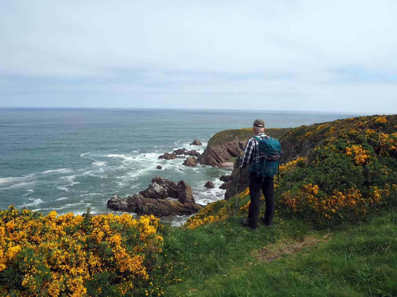 uitzicht op de Noordzeekust tussen de gaspeldoorn