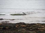 aan de kust bij Portgordon