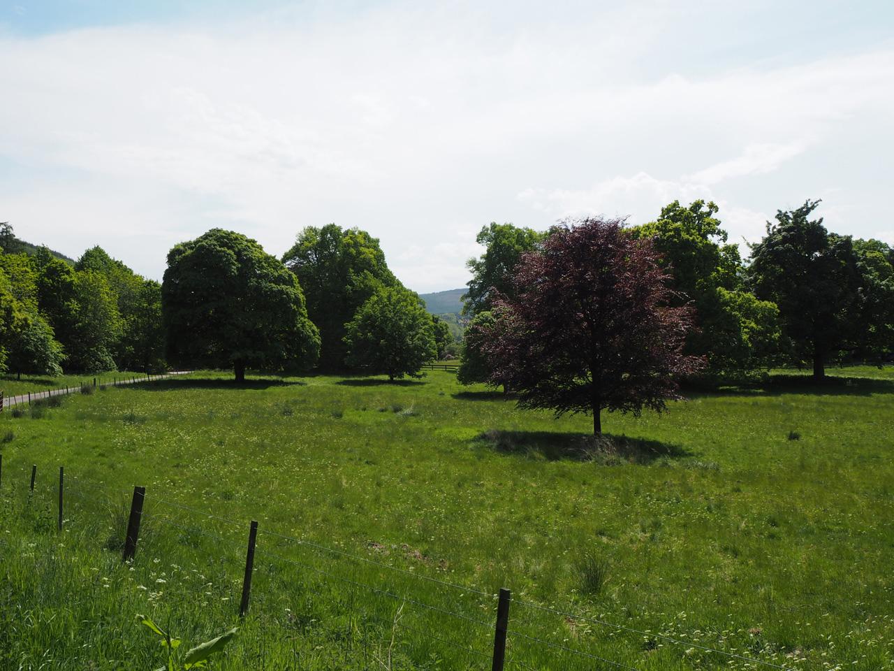 imposante bomen bij Arndilly House