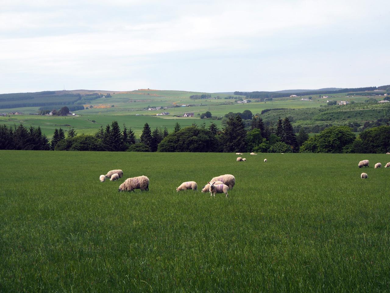 het heuvellandschap rond het Spey dal