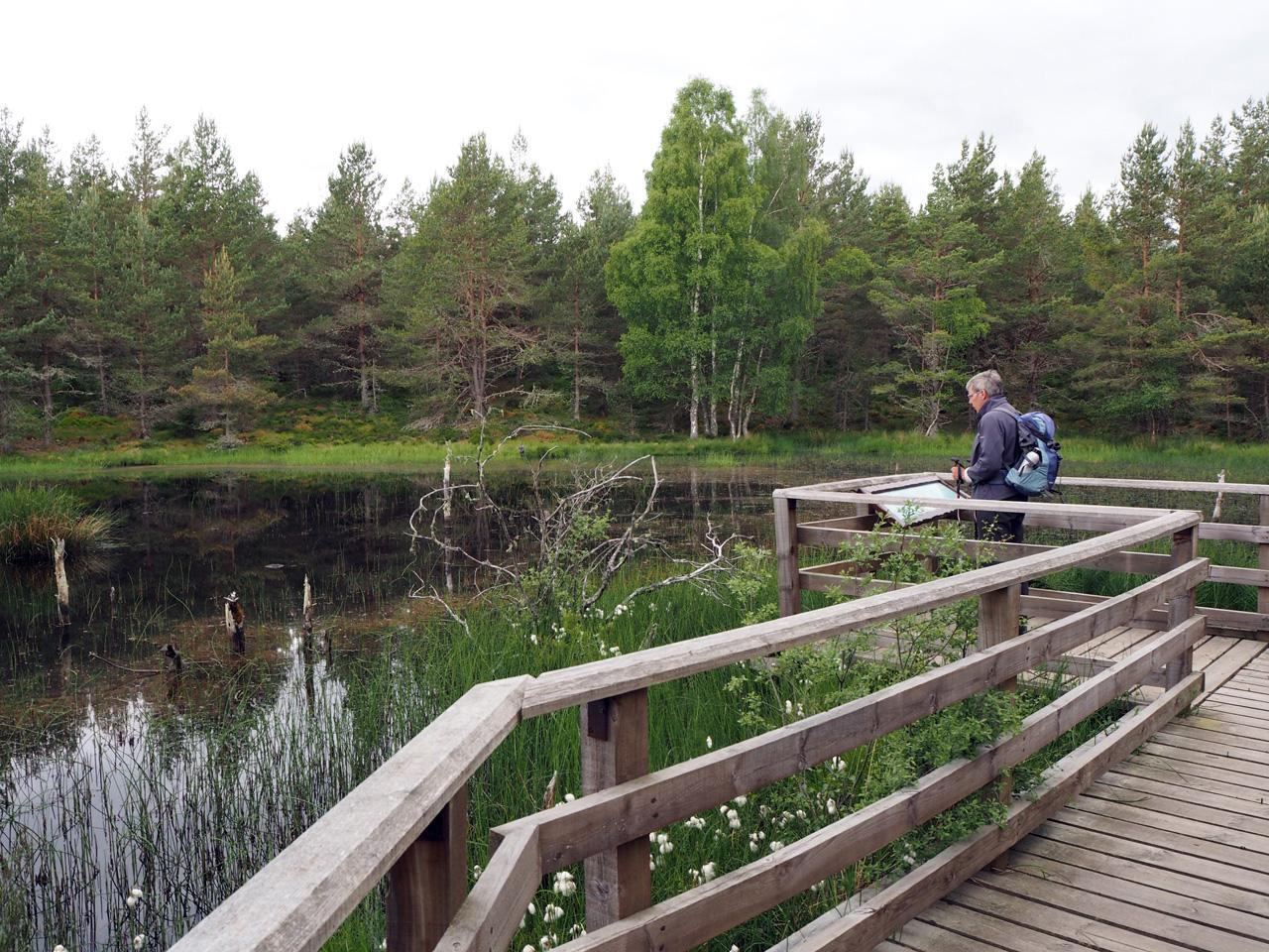 de meertjes en moerassen zijn toegankelijk gemaakt