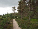 natuurgebied Abernethy National Nature Reserve