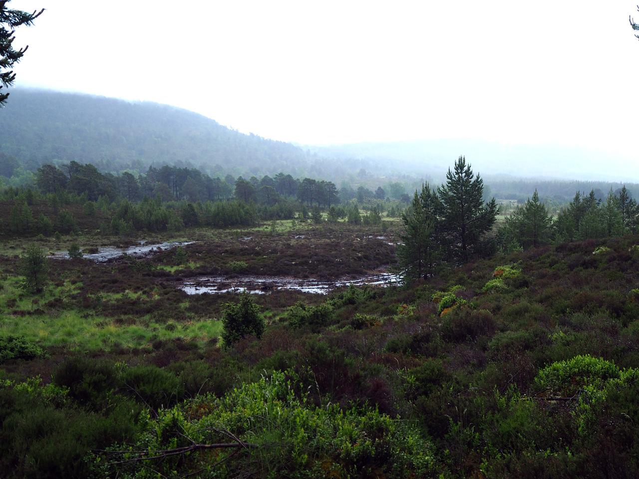 het fraaie Moor of Feshie