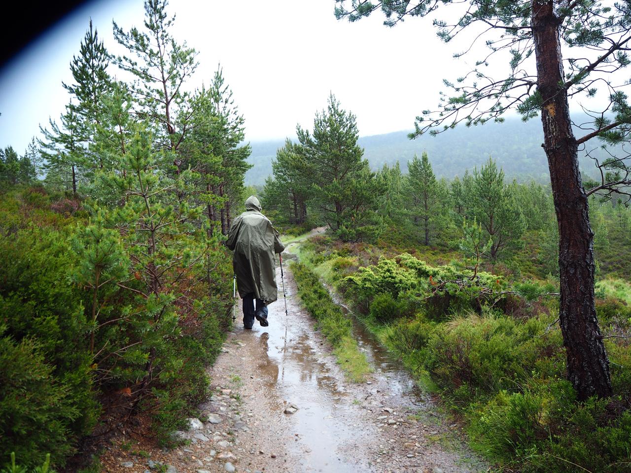het wandelpad door Inshriach Nature Reserve