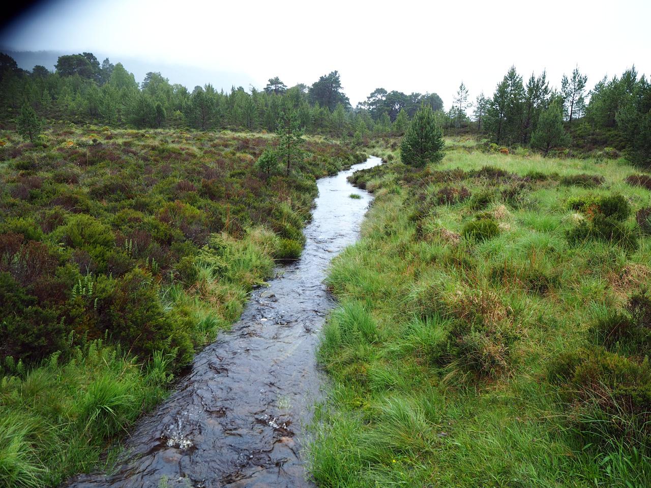 overal stroompjes in het moerasgebied