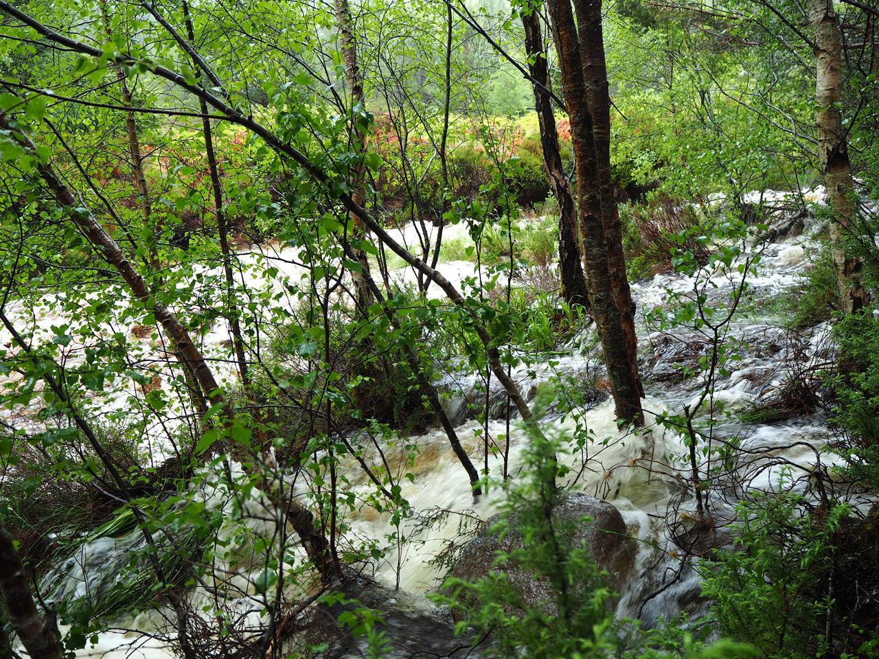 het water komt door het bos op ons af