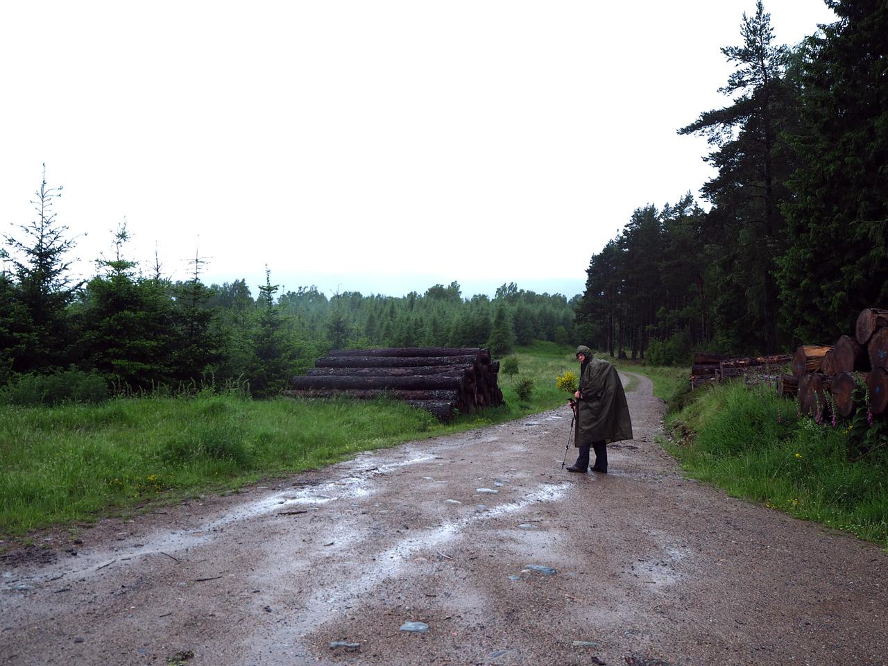 het alternatief is brede paden door het bos
