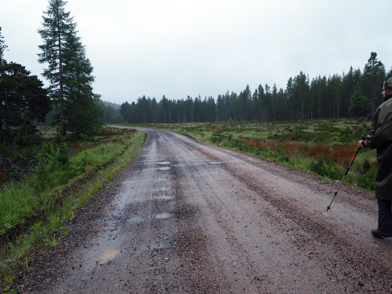 een breed pad naar natuurgebied Rothiemurchus