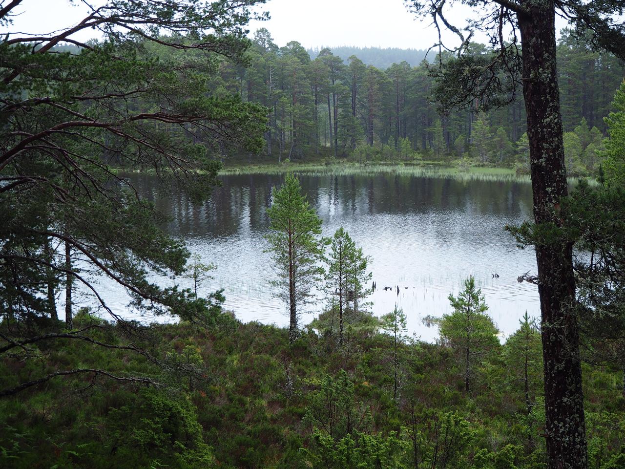 het eerste zicht op Loch an Eilein