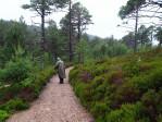 wandelpad rond Loch Morlich