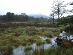 moeras landschappen in de Cairngorms