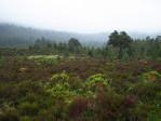 de natuur onderweg naar Loch an Eilein