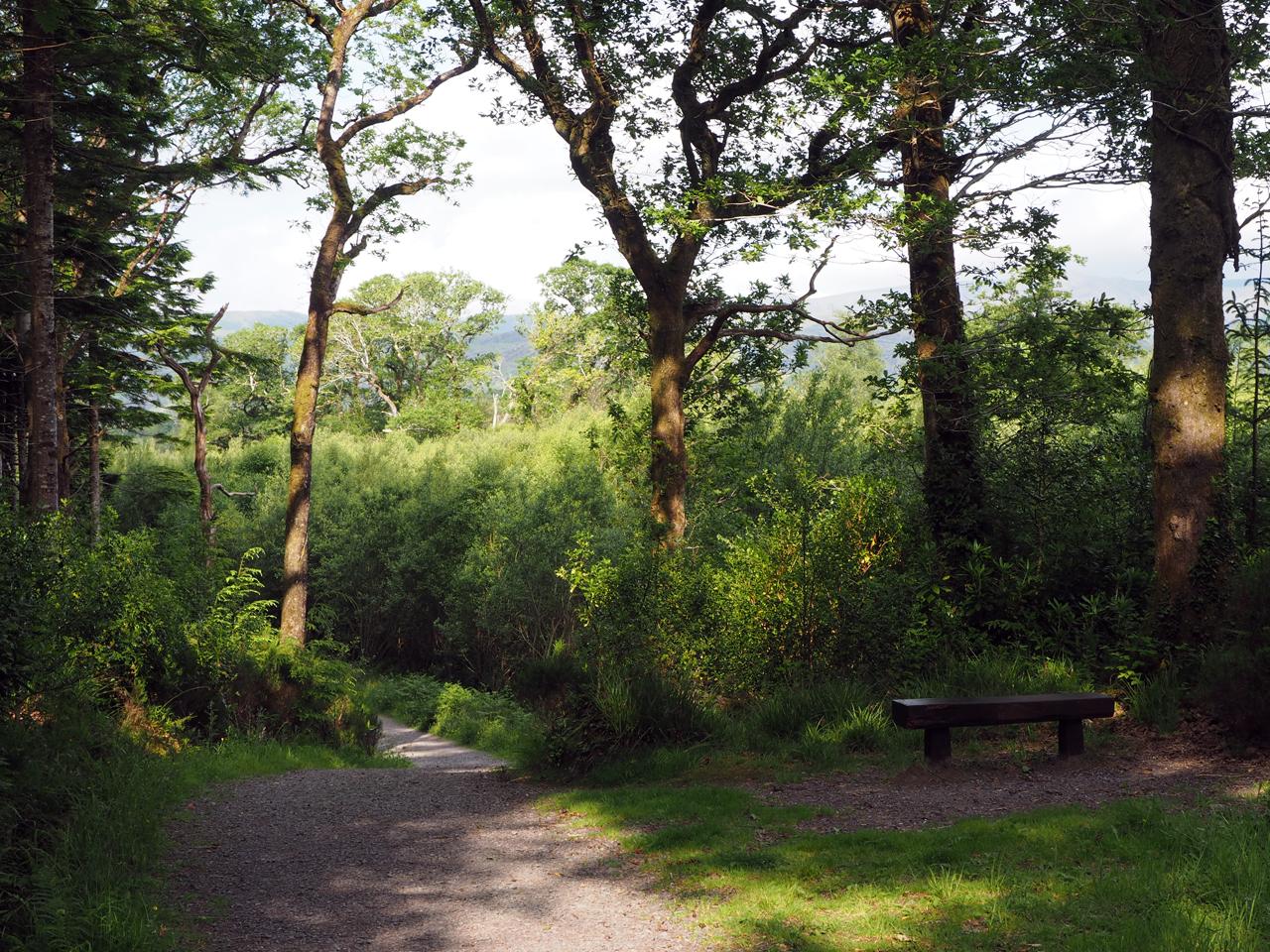 heerlijk lopen door het park