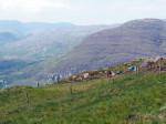 langs de berghellingen boven Adrigole