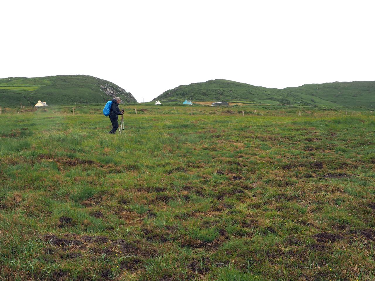 lopen door schapenweiden