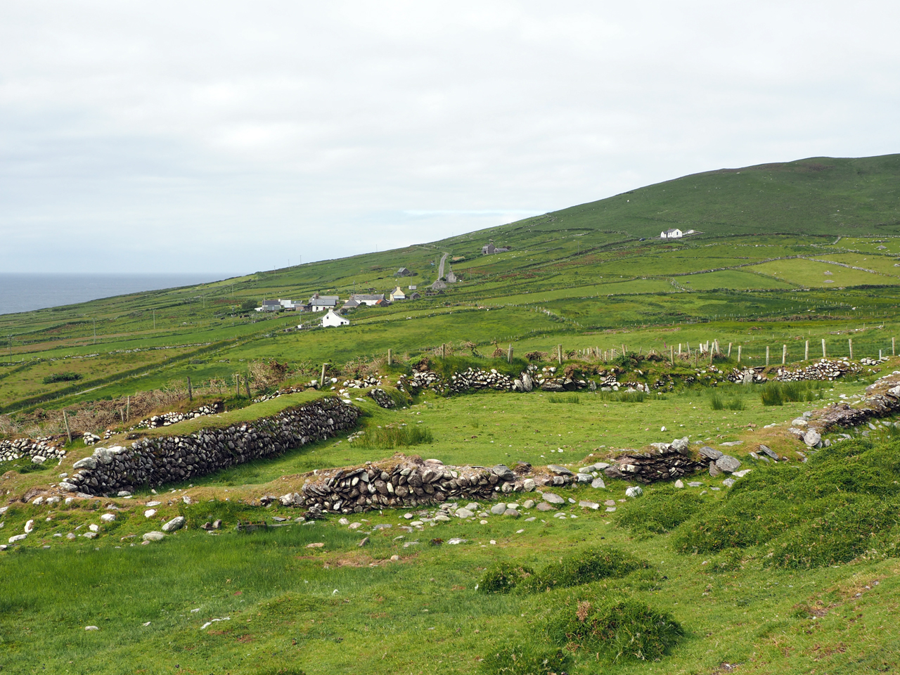 schapenweiden bij Kilmichael