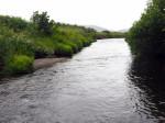 manshoge varens bij de rivier oversteek